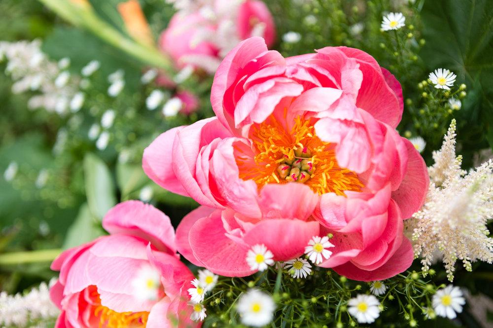 pioen roos