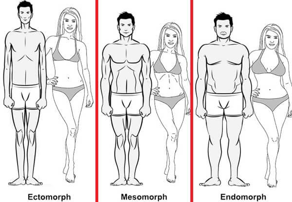 body-types-ectomorph-mesomorph-endomorph.jpg.pagespeed.ce.HWyOKbTVcn.jpg
