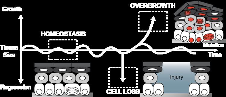 Homeostasis — Greco Lab