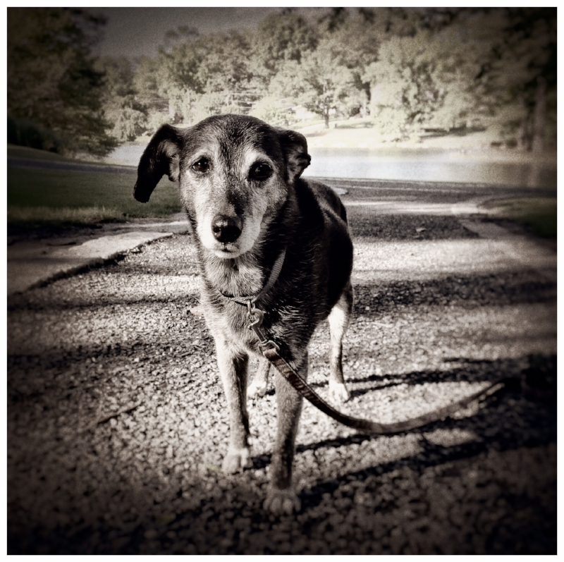 Lottie Dog.  Lake Avondale. 2015