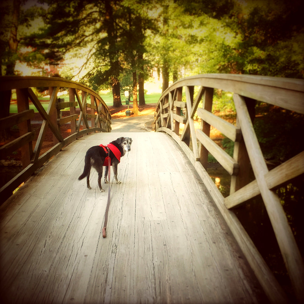 "Lottie Dog getting her ""strut"" on at Lake Avondale."