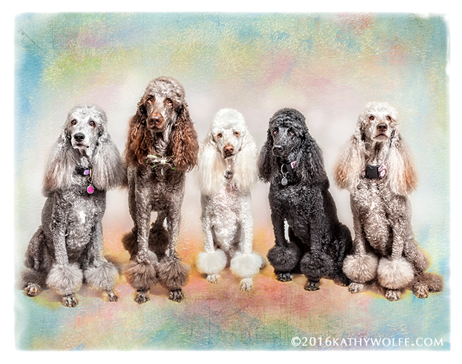 Lexi, Tucker, Sarah, Gracie and Willow