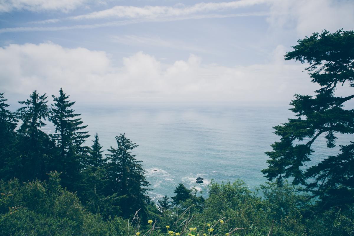 redwoods-50