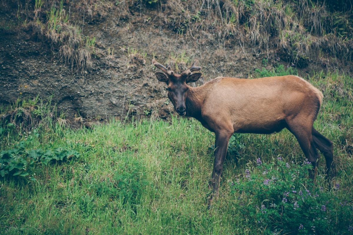 redwoods-83