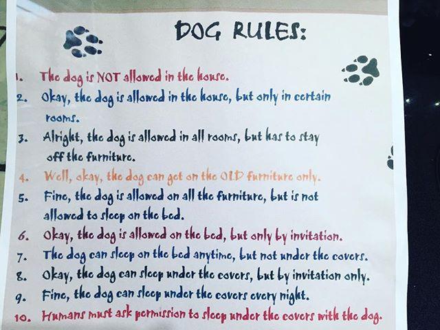 Dog Rules  #dog #mansbestfriend