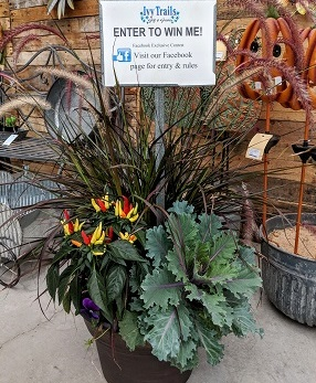 Facebook contest! - This week, find a contest to win a fall porch pot on our Facebook Page! Contest runs through Monday, October 8th.'LIKE' & follow our page to get notifications of other upcoming contests!