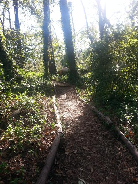 pretty path.jpg