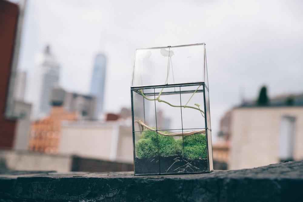 modern insect terrarium breeding mantis