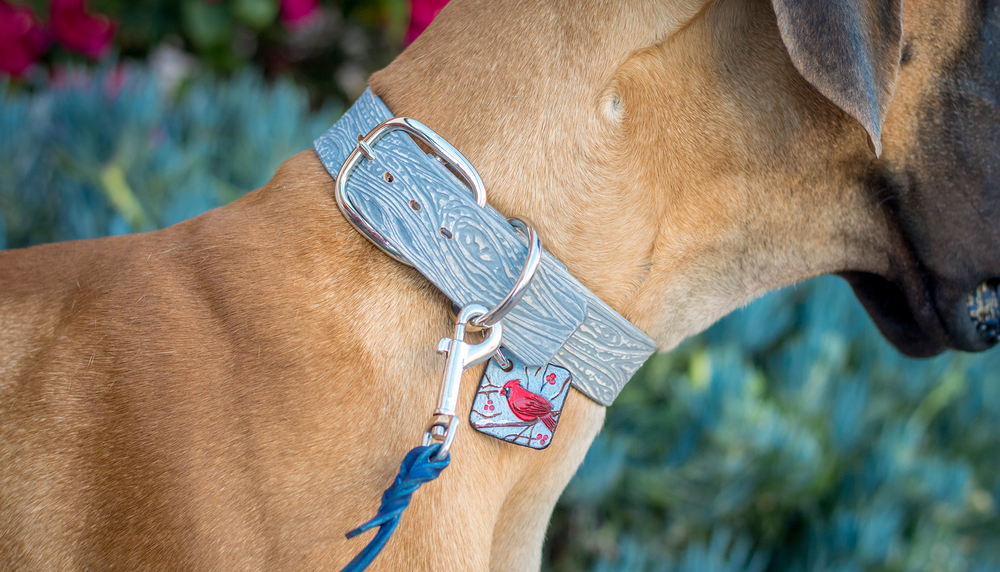 Mix and Match - Antique White Wood collar + Cardinal charm + Winter Blue Leash