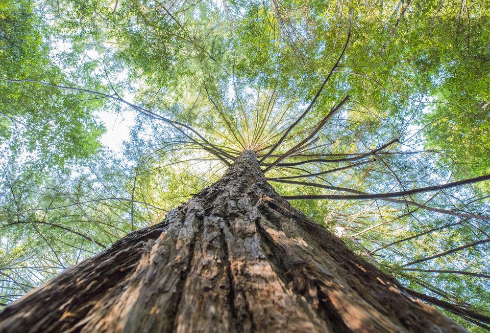 Sanborn County Park, Santa Cruz Mountains, California