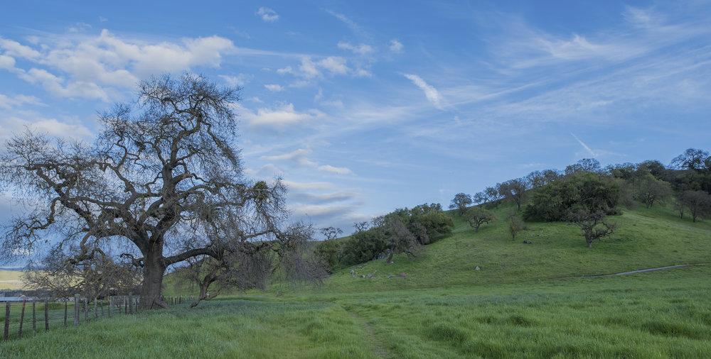 Coyote Valley Open Space Preserve, Morgan Hill, California