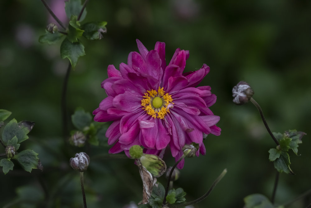U. S. Botanical Garden, Washington, D. C.