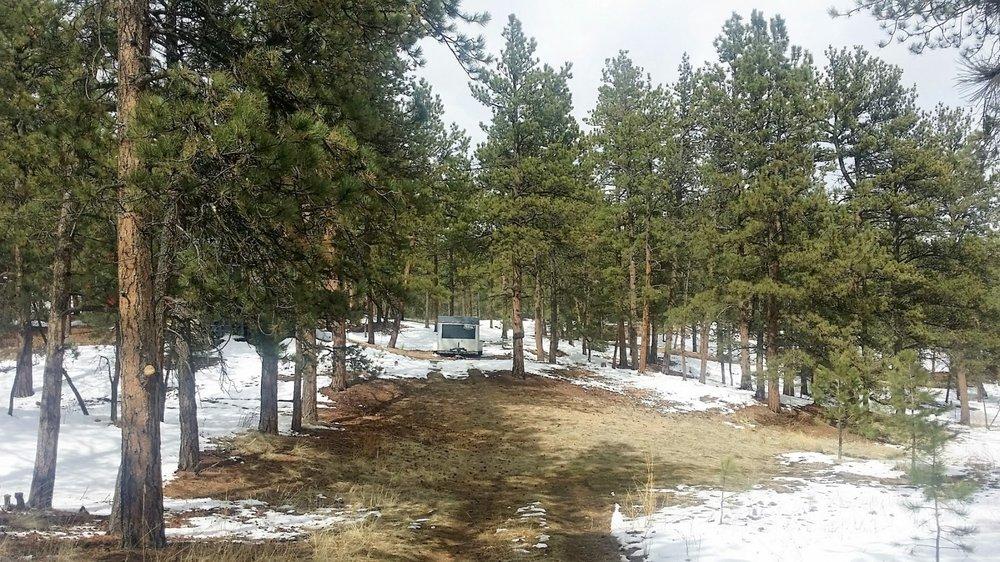 22-1483-Trees1.jpg