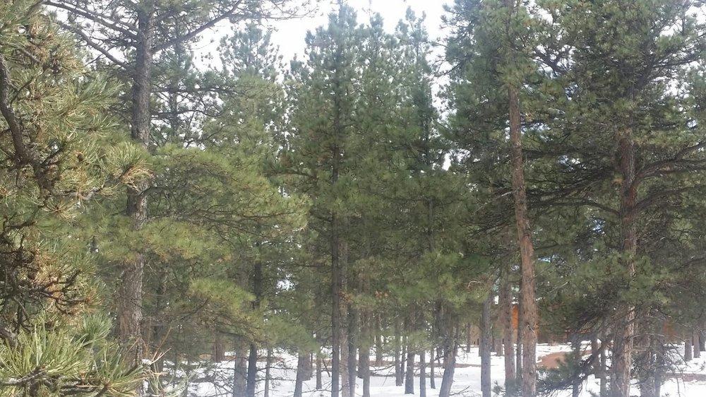 26-1912-Trees5.jpg