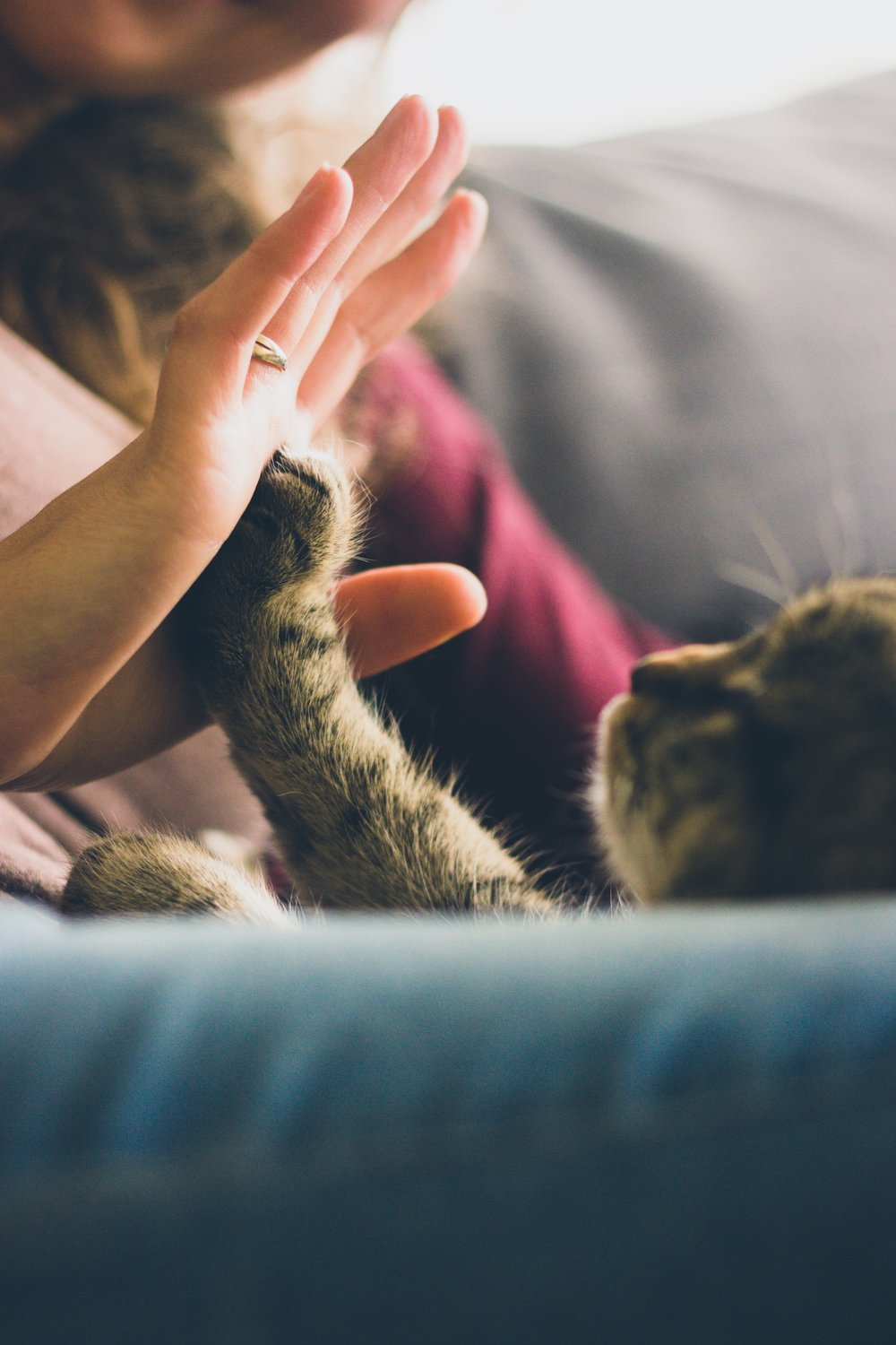 Guys, I know I need to be finishing that up,but my cat is giving hi-fives right now...