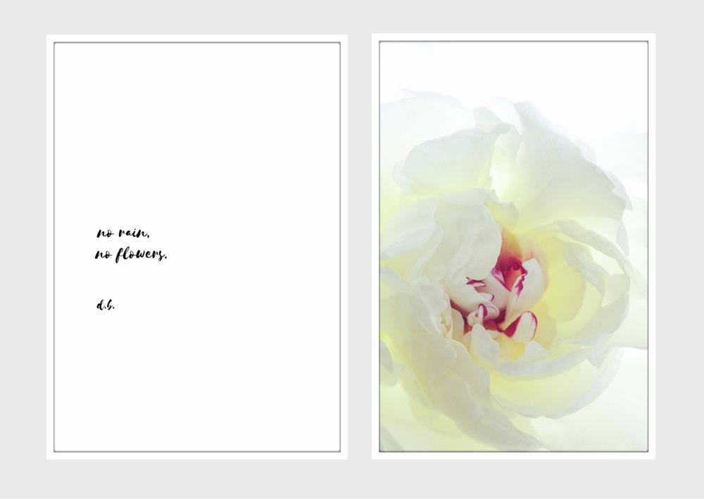 Untitled design (11).jpg