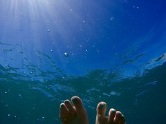underwater-1081849__180.jpg