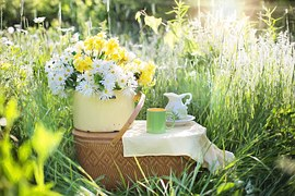 daisies-1466851__180.jpg