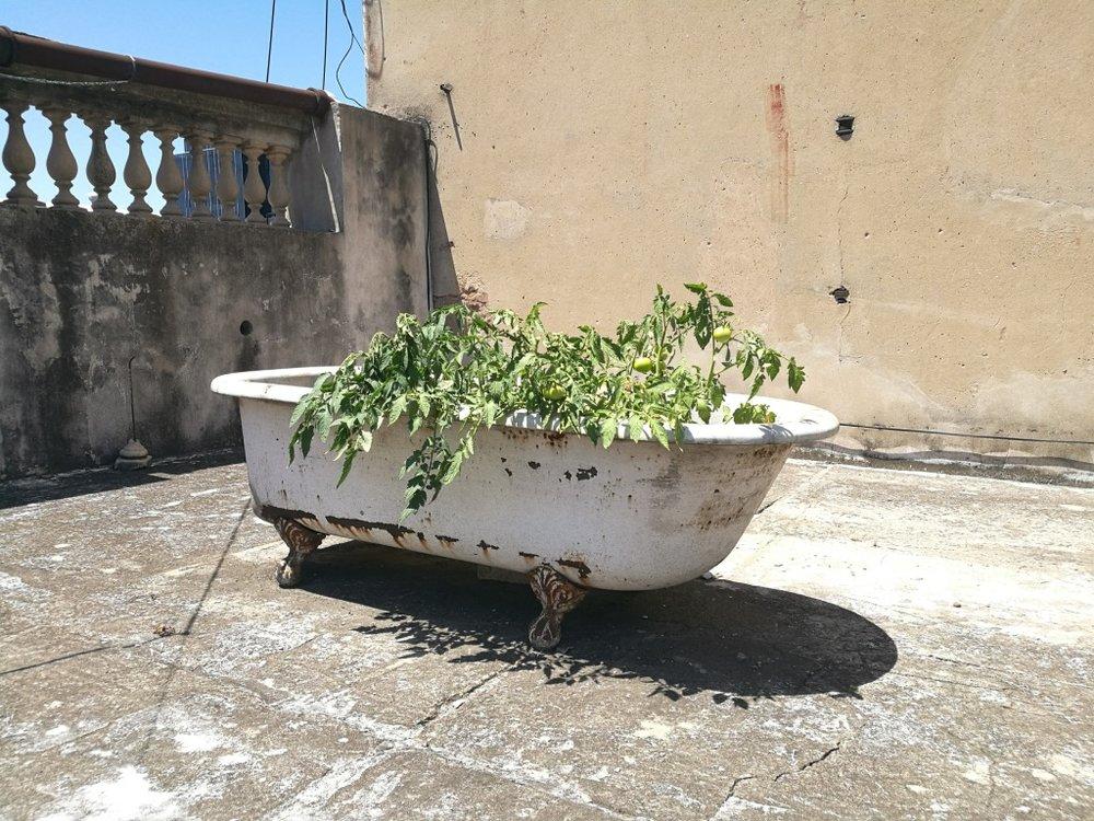 På taket växte tomater.