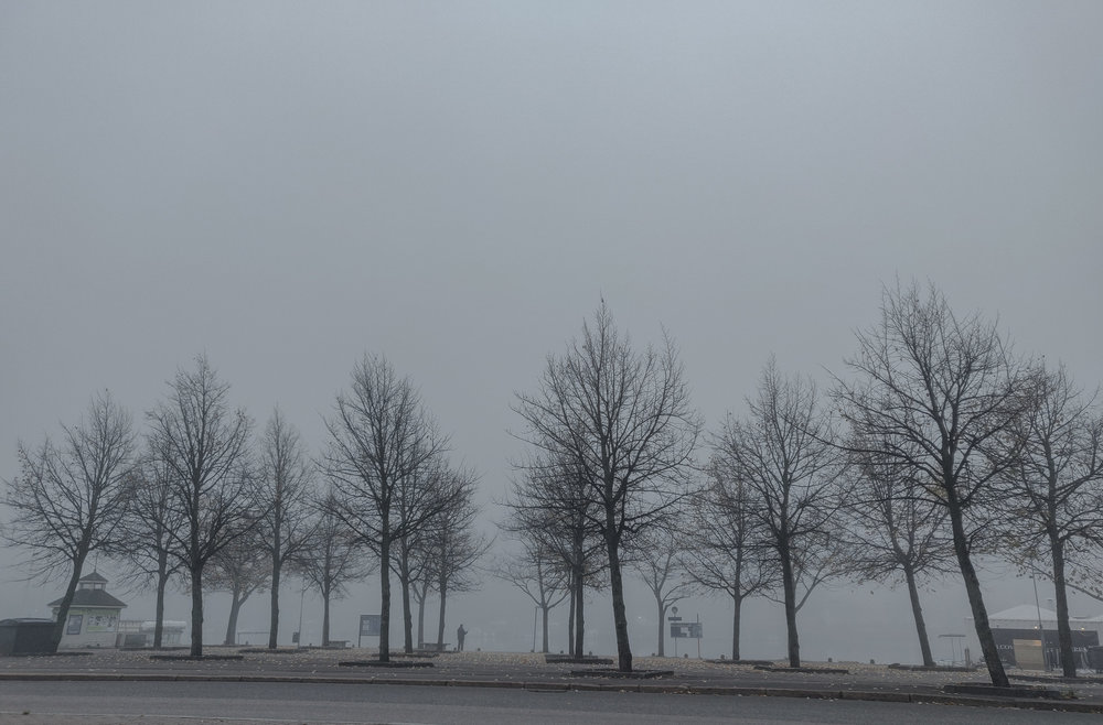 Känner mig ungefär lika förvirrad som vädret i morse. Dimma ute, dimma inne – eller åtminstone i mitt sinne.