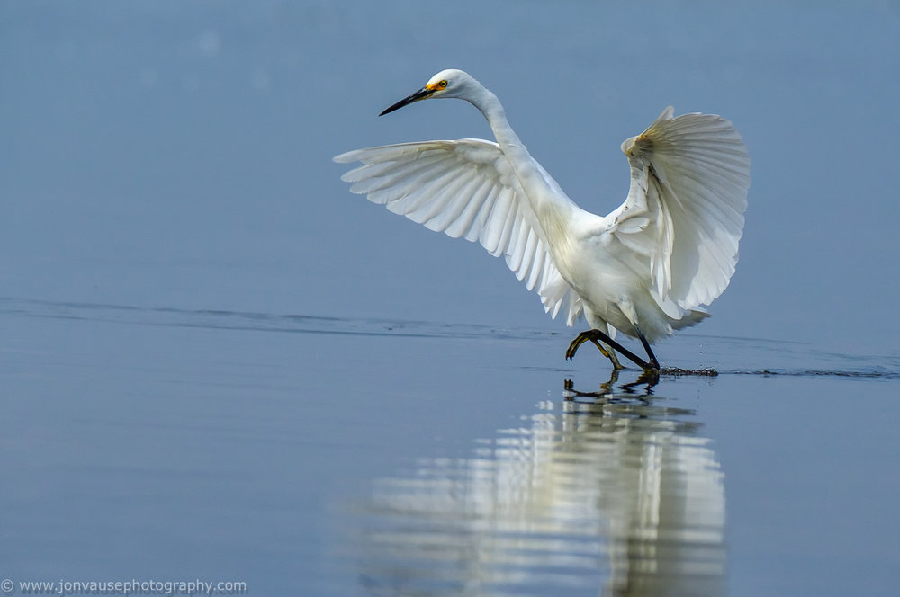 Little_Egret_LR_7676_130518-.jpg