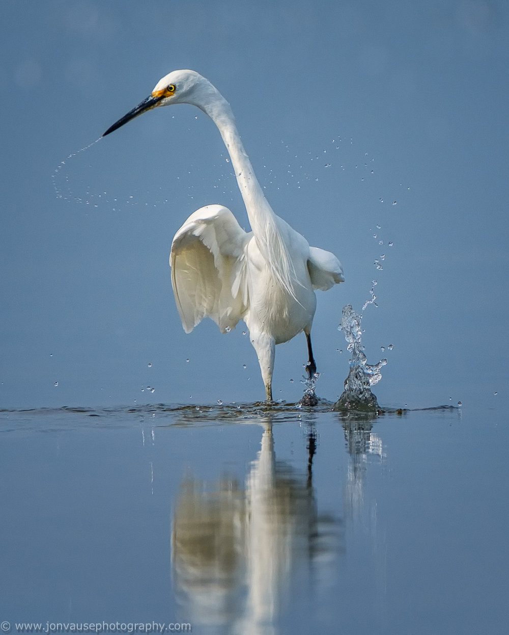 Little_Egret_LR_7566_130518-.jpg