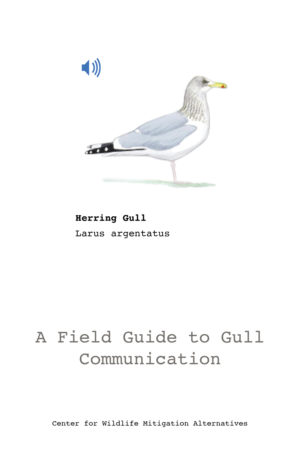 gull-call-book.png