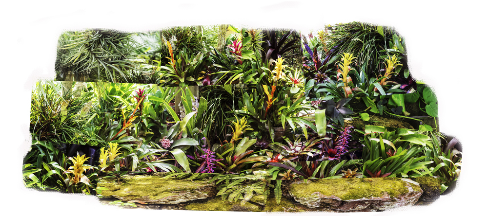 Panoscape. Combined Panorama and composite of 42 photographs taken in the Matthaei Gardens Greenhouse, U. Michigan.