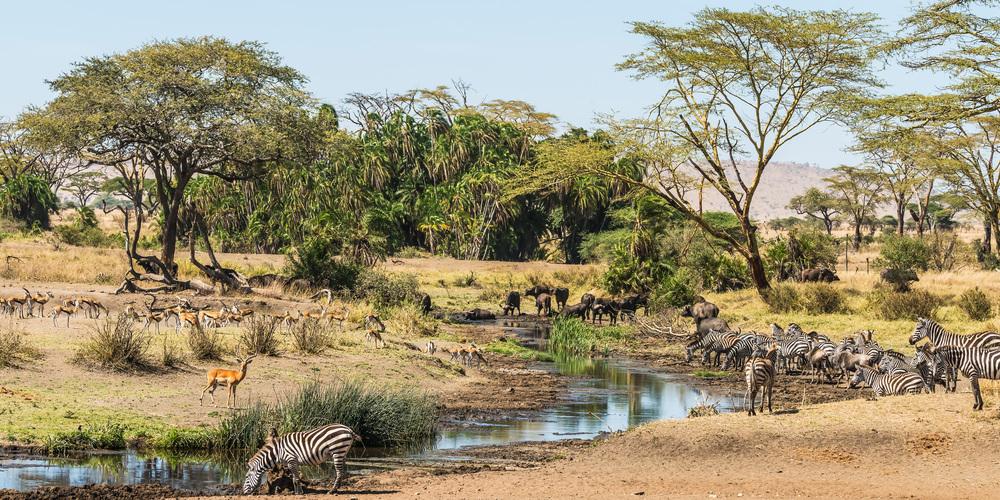 Serengeti Waterhole during the Dry Season, Tanzania.