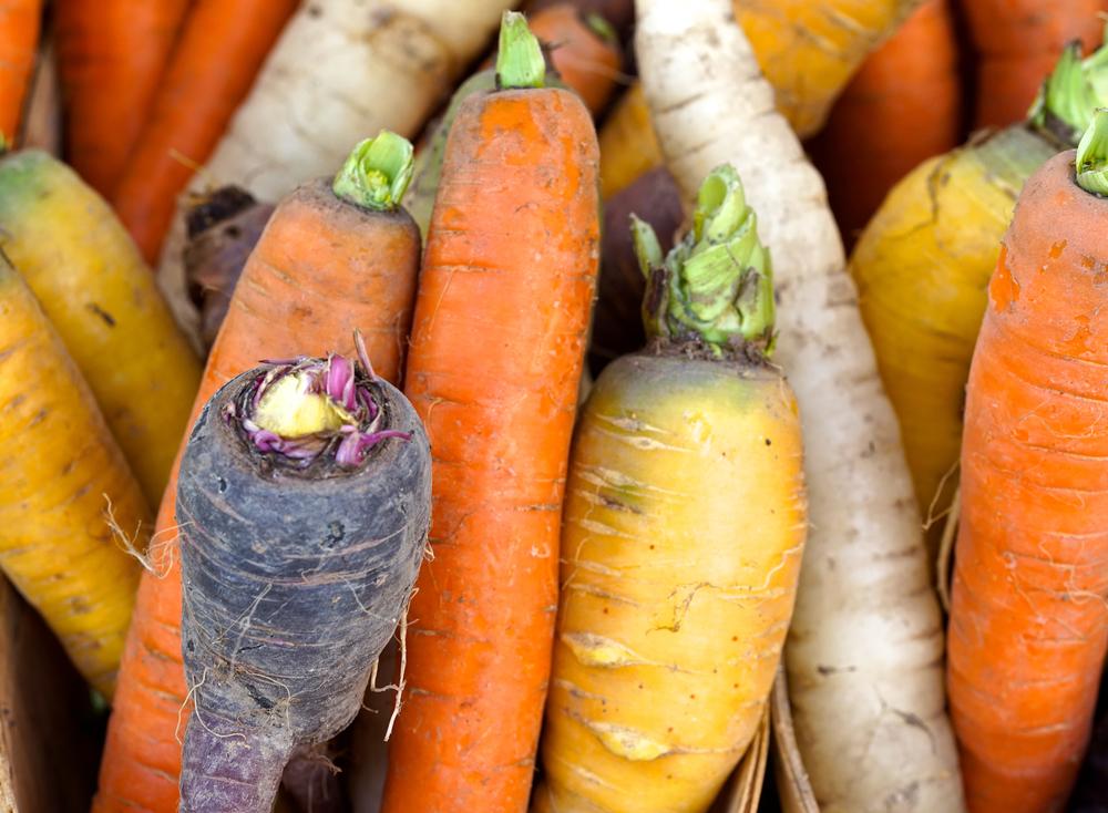 Carrots (at a farmer's market)