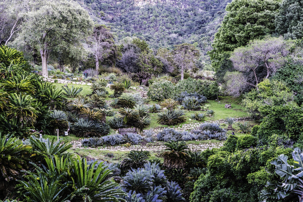 Kirstenbosch National Botanical Gardens, Cape Town SA