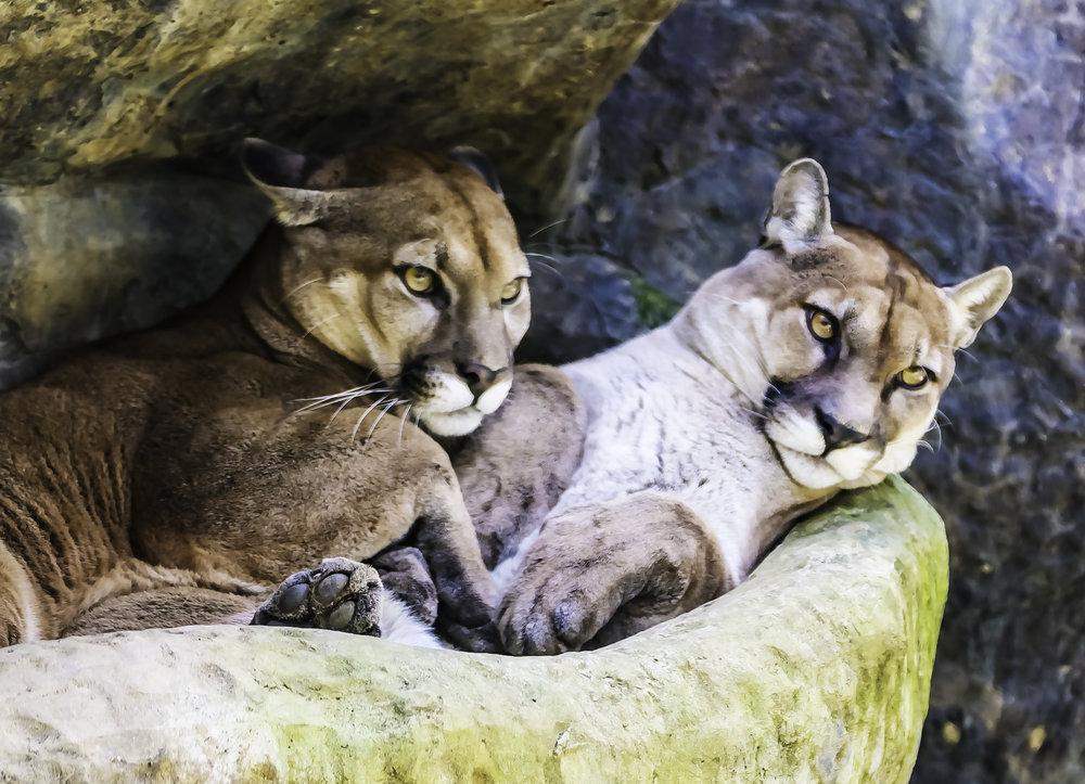 Puma Mates, Aw Shucks