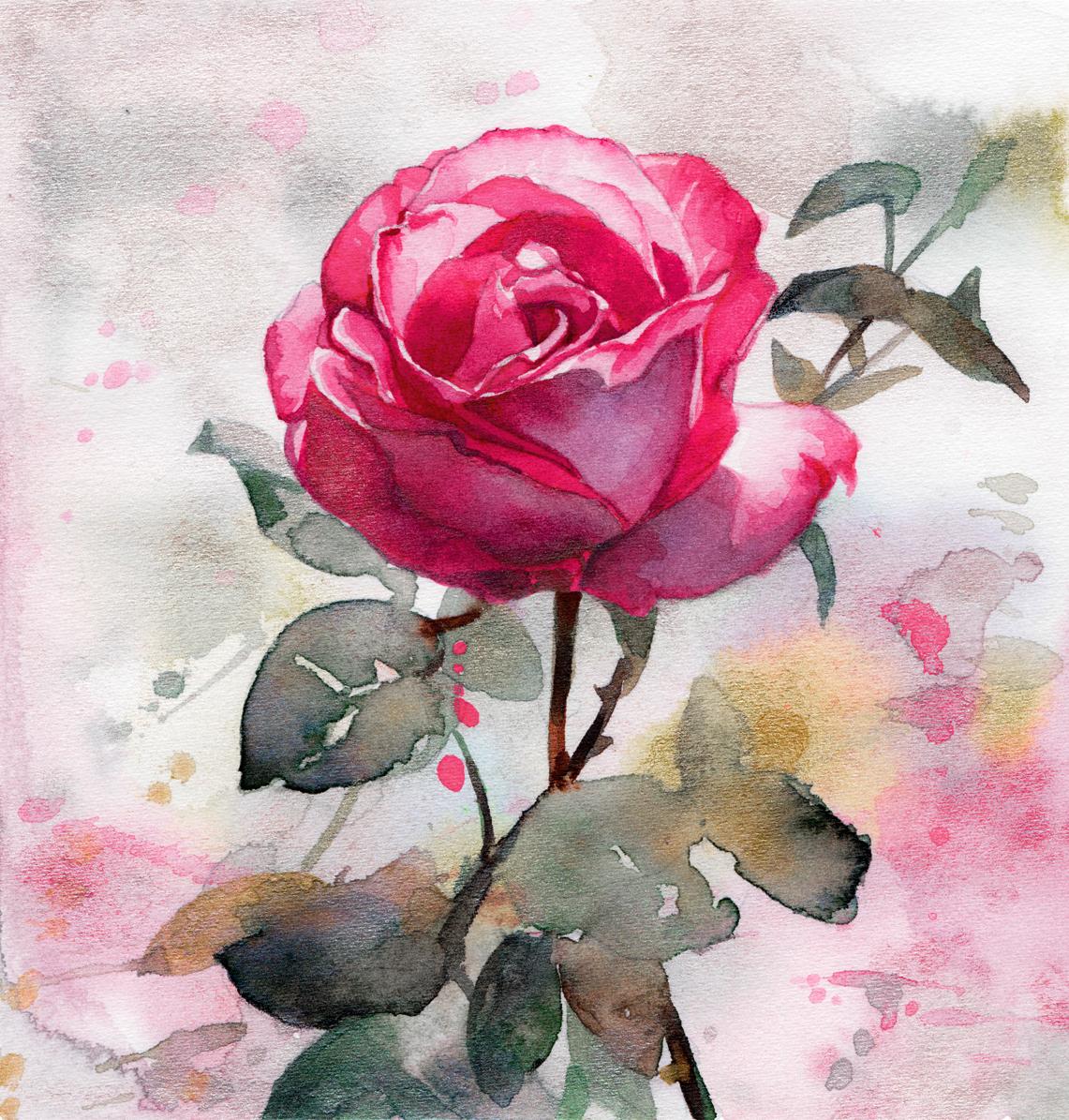 Original Watercolor Painting Study Of A Rose Lioba Bruckner