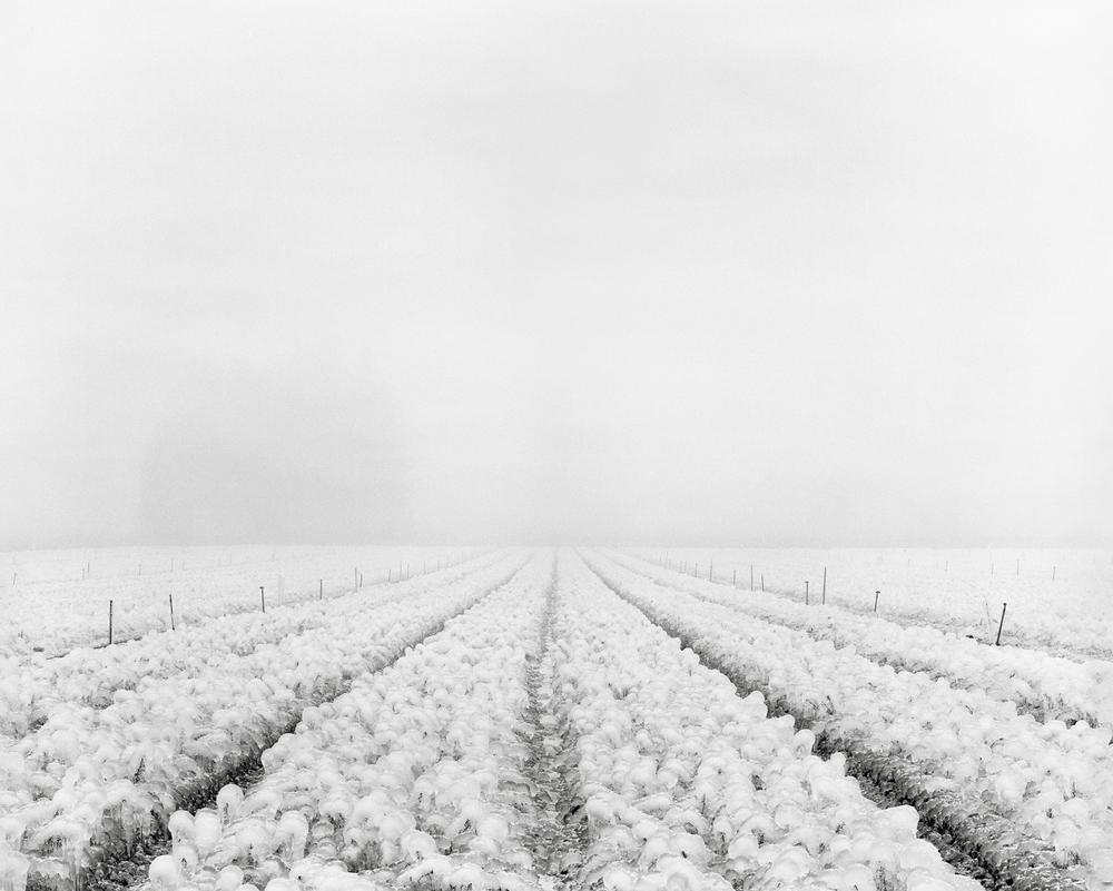 Frozen Field, Canby, Oregon