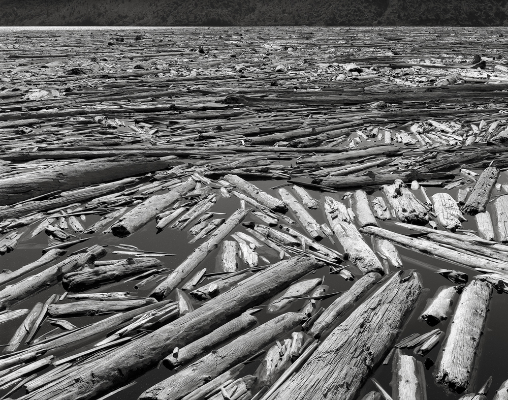 Dead Trees, Spirit Lake, Mount St. Helens