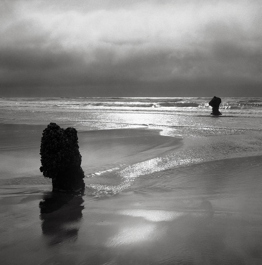 Ghost Forest, Neskowin, Oregon
