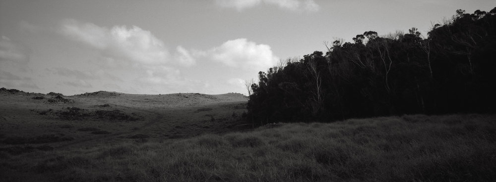 At the Edge of a Eucalyptus Forest, Easter Island