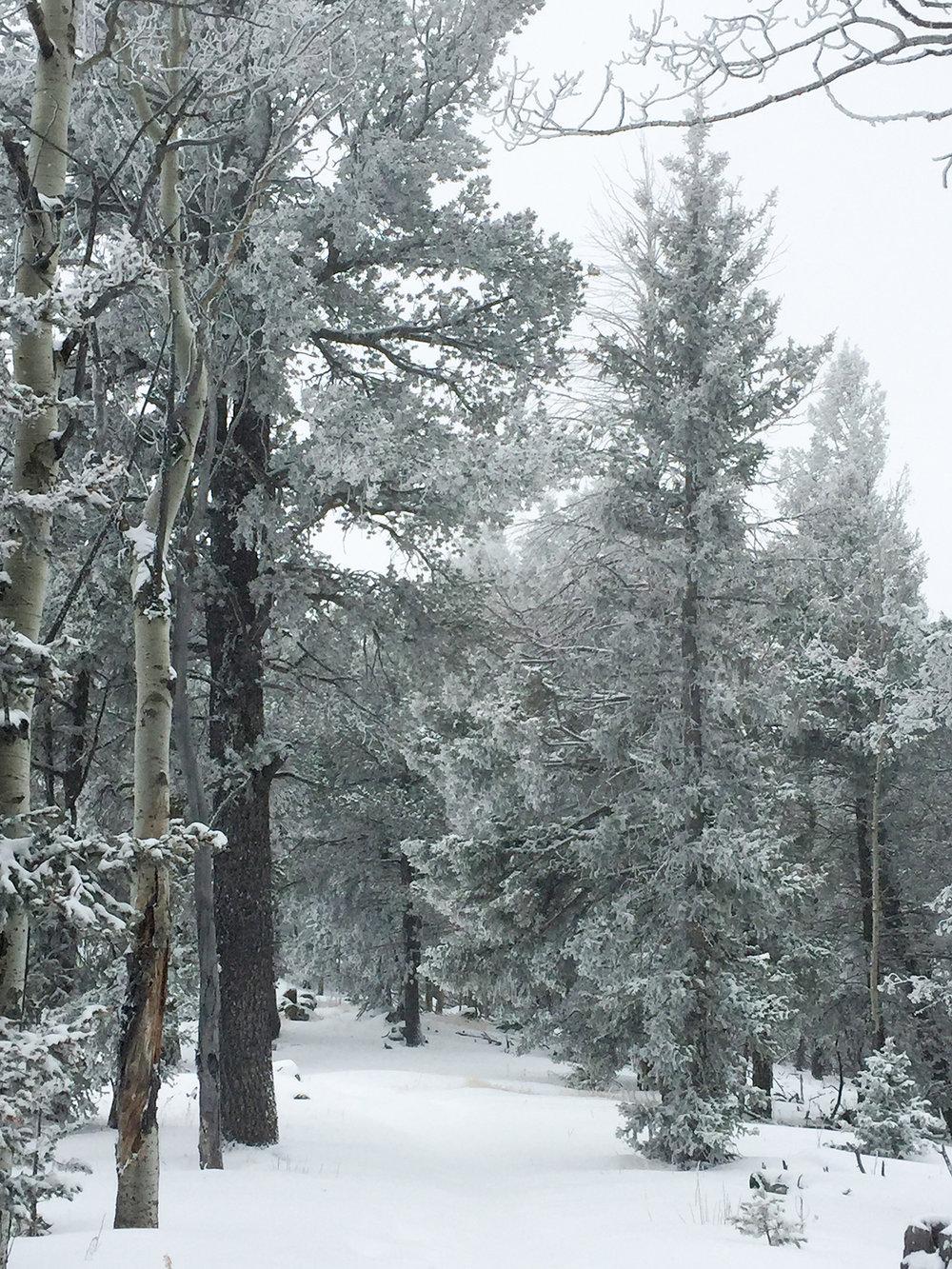 My next attempt - photo taken at Mueller State Park near Divide, Colorado
