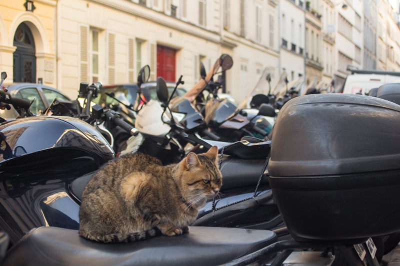 Paris-4112.jpg