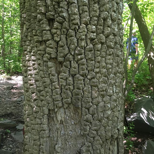 Cool bark on a tree #bark #tree #treebark