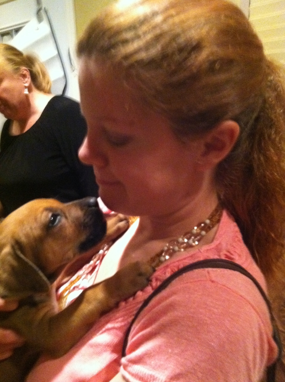 This was the day that Melissa met our Ridgeback, Betty. Betty was about 7 weeks old here. Melly are meeting for the first time.   It is hard to see, but Betty is wearing a gold ribbon for a color. She is our golden girl, hence Betty for Betty White.