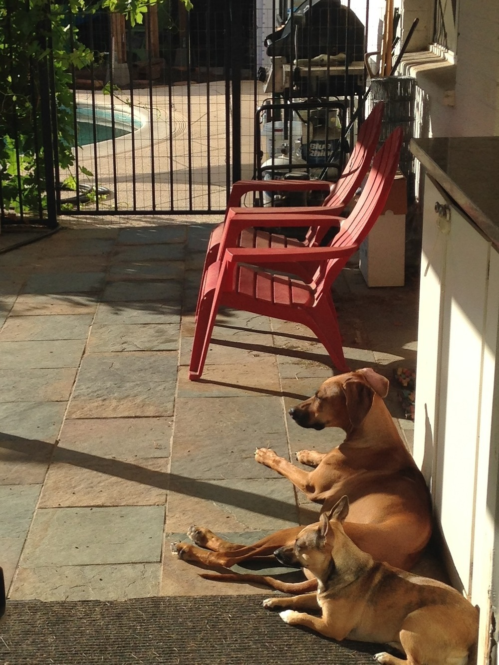 Betty and Laika in the morning sun. (ca: Sept 2014)