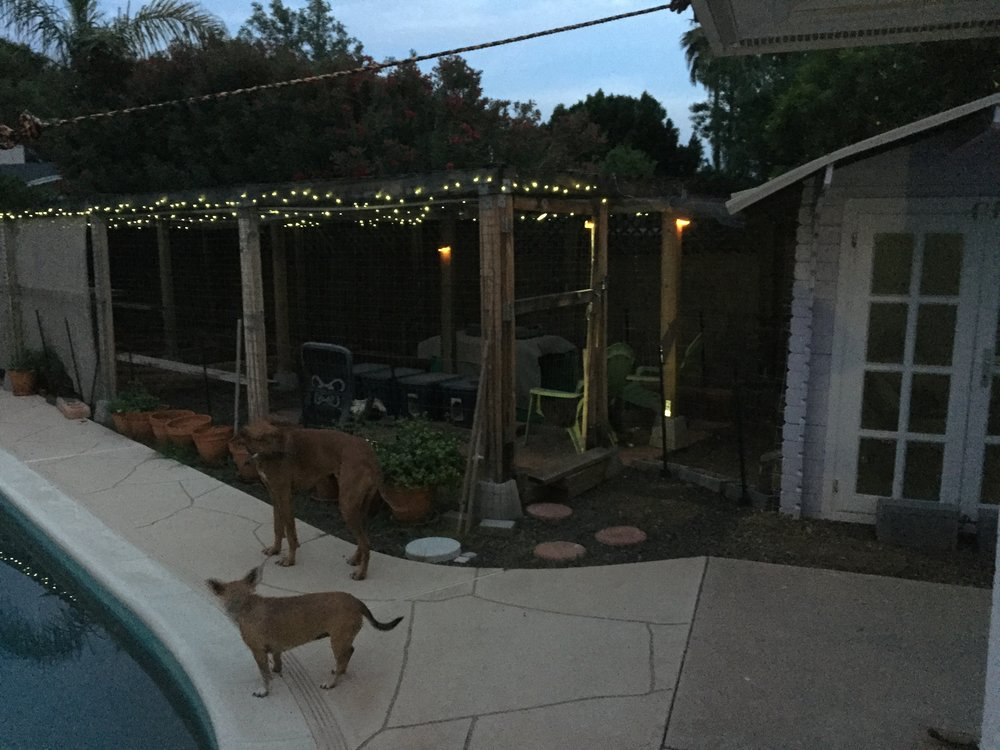The outside cat enclosure at dusk. The lights are solar, and yes, they have access to the shed. The dogs cannot get in to mess with them either.
