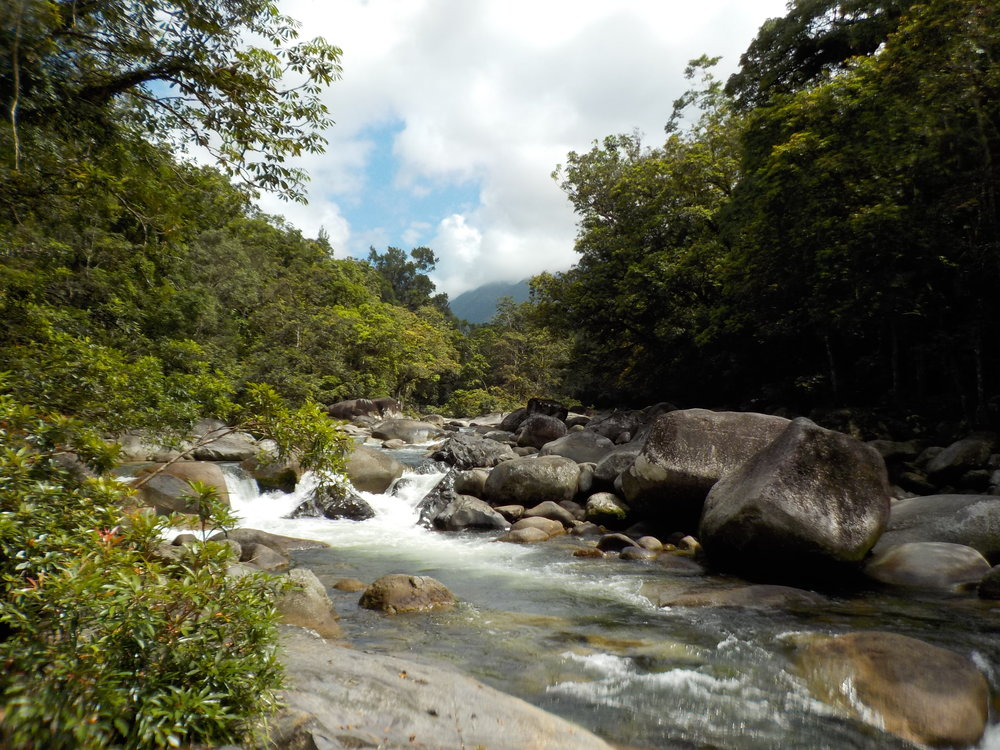 Watering hole during the Mossman rainforest walk