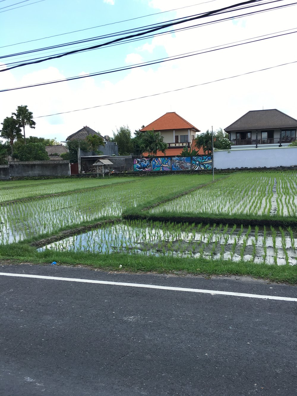 A common scene from the street in Canggu - rice fields and grafitti