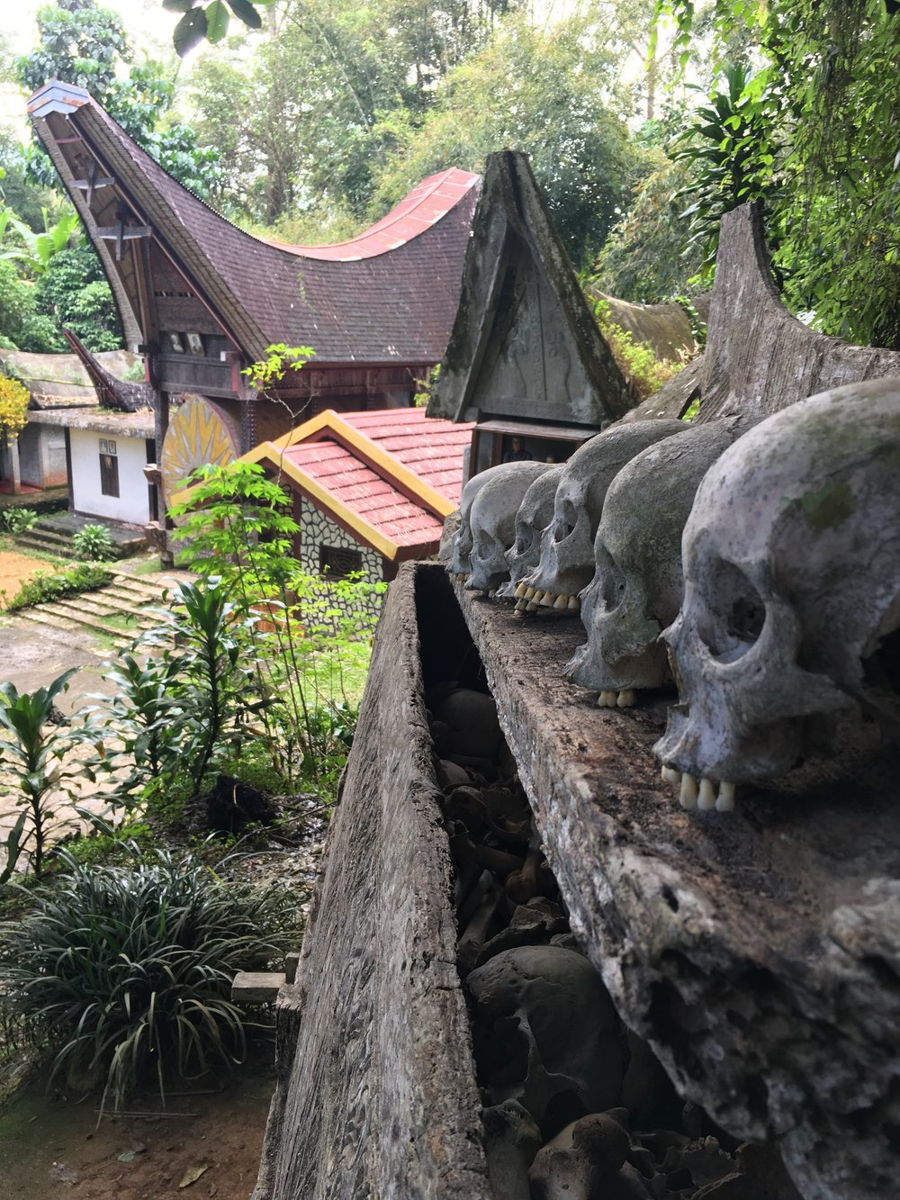 A Morbid, Bloody, and Hospitable Experience in Tana Toraja