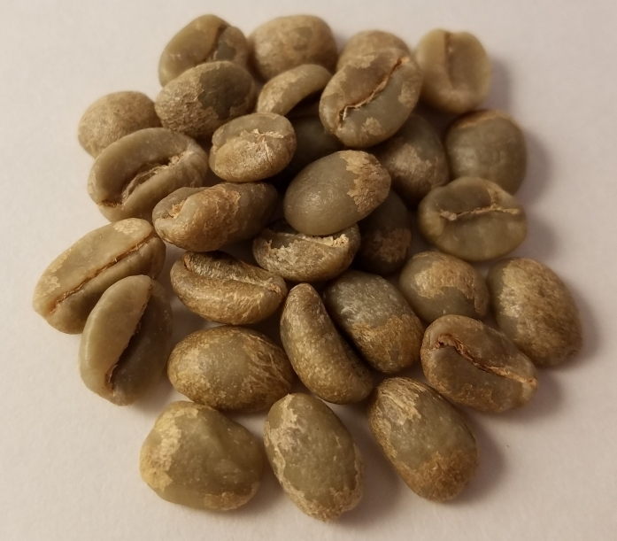 Green (unroasted) coffee beans. Gross, right?