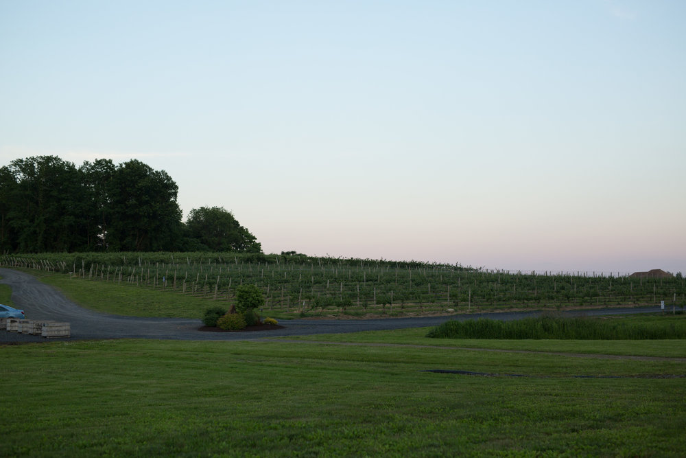 nostrano_vineyards_wedding_0086.JPG
