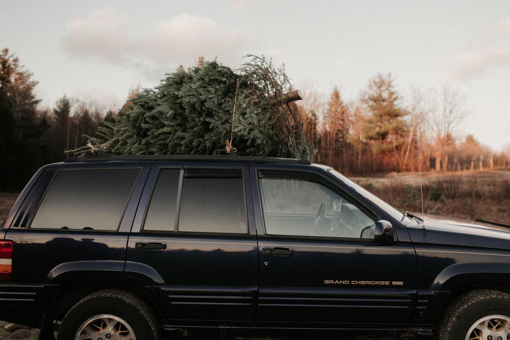 christmas_tree_farm_engagement_shoot_034.JPG