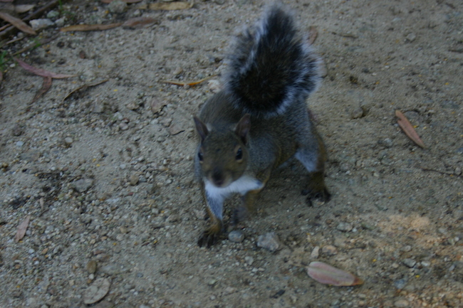 squirrell_2